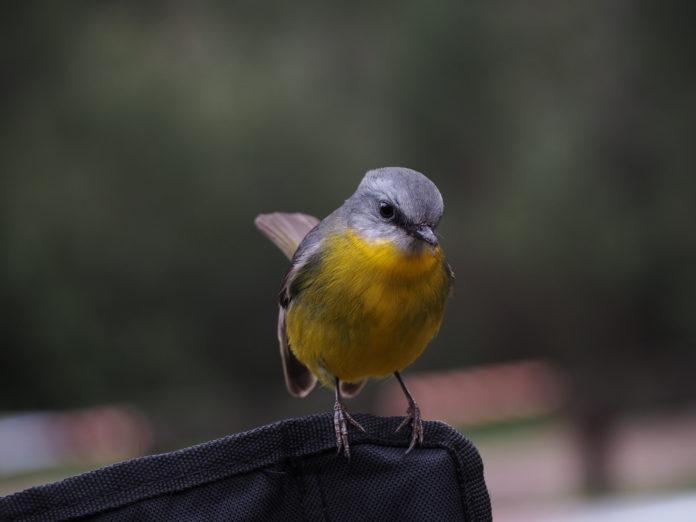 Obrączkowanie wybranych gatunków ptaków w rękach mieszkańców