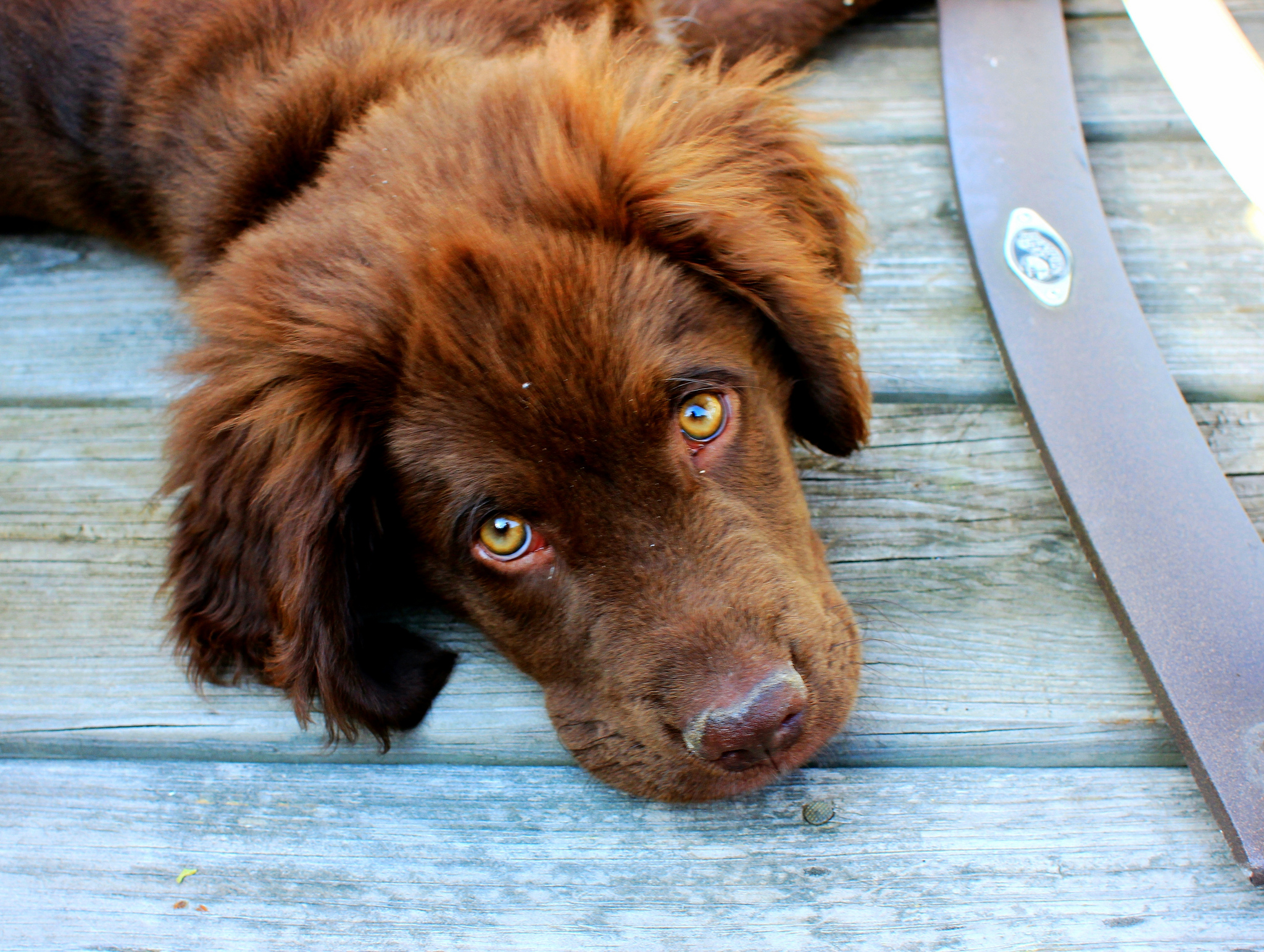 Rusza akcja kastracji zwierząt domowych