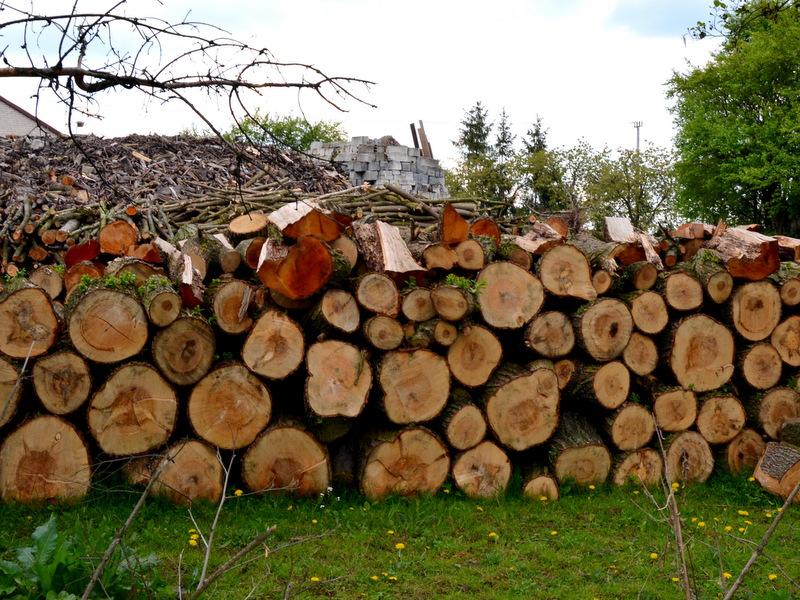 Wycinka drzew? Znów zmienili przepisy