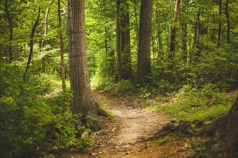 Zakaz wstępu do lasu z powodu zagrożenia