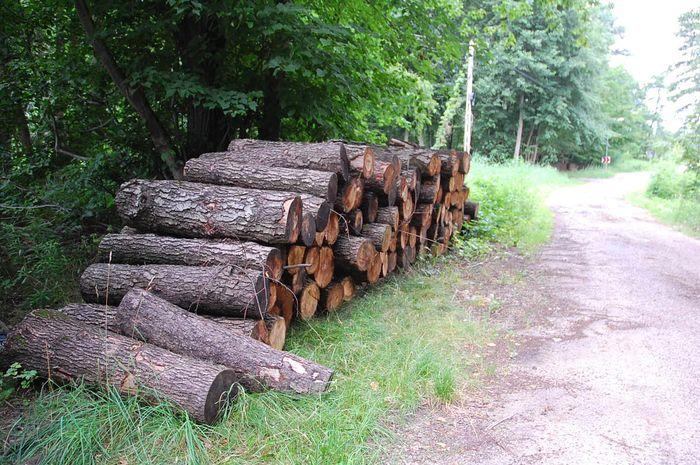 Odbyło się kolejne spotkanie w sprawie lasów. Nadleśnictwo zrezygnuje z rębni zupełnych